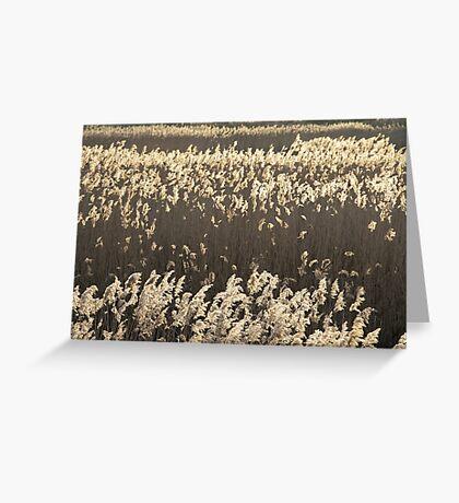 Norfolk Reeds Greeting Card