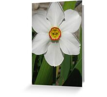 The face of spring Greeting Card