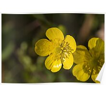 yellow flowers in spring Poster