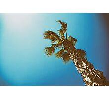 Green Palm Tree On Clear Blue Sky Photographic Print