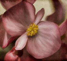 Dewy Pink Painted Begonia by Lois  Bryan