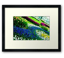 Multicolored tulips. Framed Print