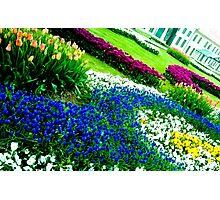 Multicolored tulips. Photographic Print