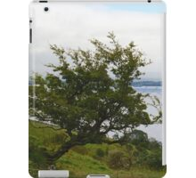 """Over a lifetime in the elements upon the Emerald Isle, she bowed and embodied the wind~~~"" iPad Case/Skin"