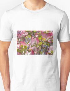blooming magnolia flowers in spring T-Shirt