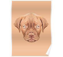 Dogue de Bordeaux low poly Poster