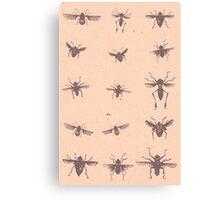 Insect mania Canvas Print