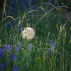 flowers and flowers and grass by Amanda Huggins