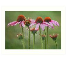 painted coneflowers Art Print