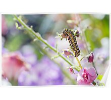 Caterpillar in the Flowerbed Poster