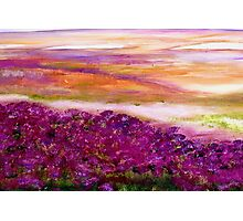Coloured heath Photographic Print