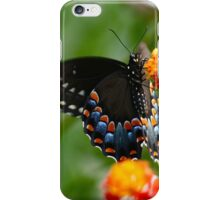 Colorful Black Swallowtail iPhone Case/Skin