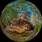 Redgum, Royal National Park by Erik Schlogl