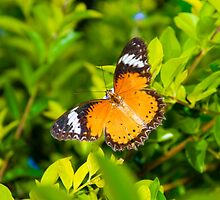View of Colorful Orange butterfly in summer time by Stanciuc