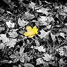 The leaf - selective colour by PhotosByHealy