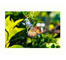 View of Colorful Orange butterfly in summer time Art Print