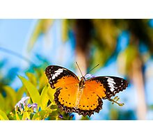 View of Colorful Orange butterfly in summer time Photographic Print