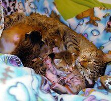 Motherly Love by worldtripper