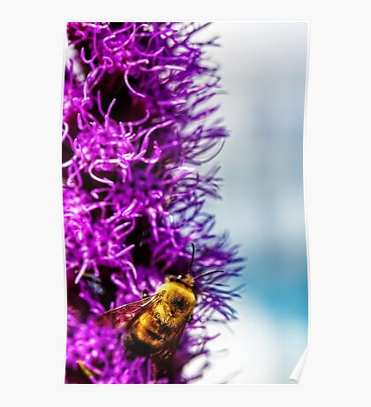 bumble bee at work Poster