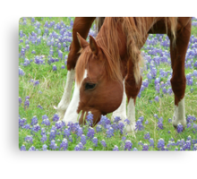Country Heaven Canvas Print