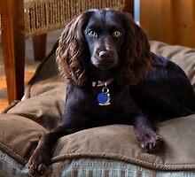 Princess Daisy by KSKphotography