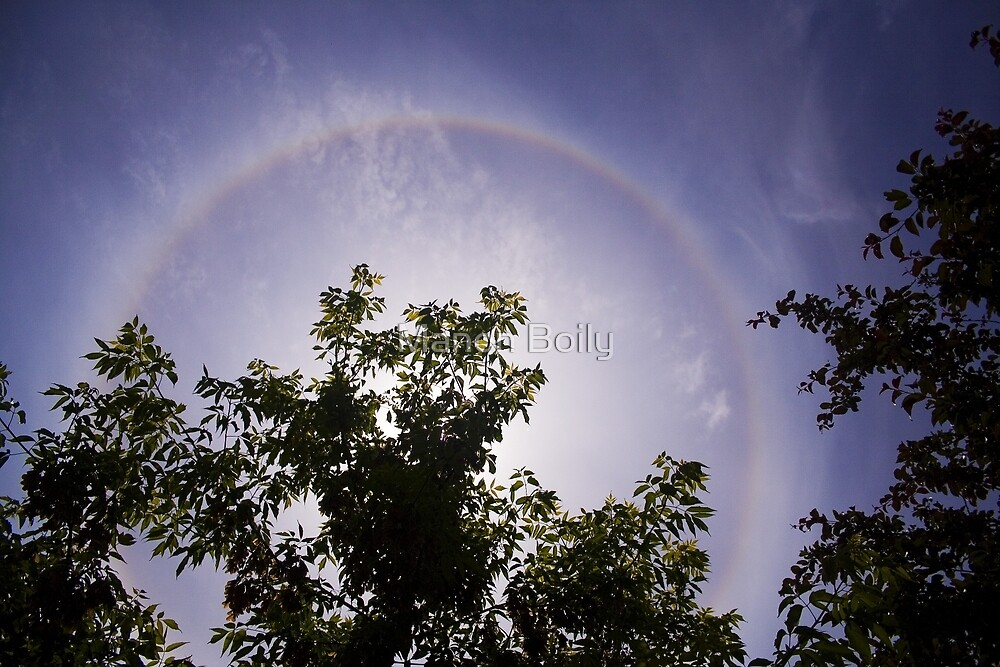 halo in chinese garden by Manon Boily