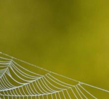 The Webs We Weave Sticker