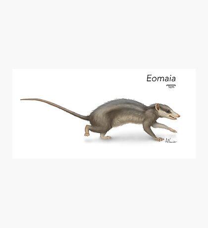 Eomaia Photographic Print