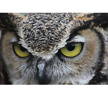 Horned Owl up close... Photographic Print
