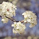 Blossom Blue by Jo Williams