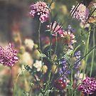 Wildflowers by Jo Williams