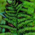 fern in the forest by spetenfia