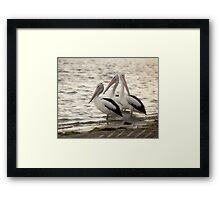 Pelicans - Golden Beach, Sunshine Coast Framed Print