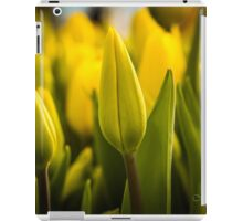 Let Our Own Light Shine  iPad Case/Skin