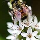 Bumble Bee - Late Afternoon by T.J. Martin