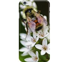 Bumble Bee - Late Afternoon iPhone Case/Skin