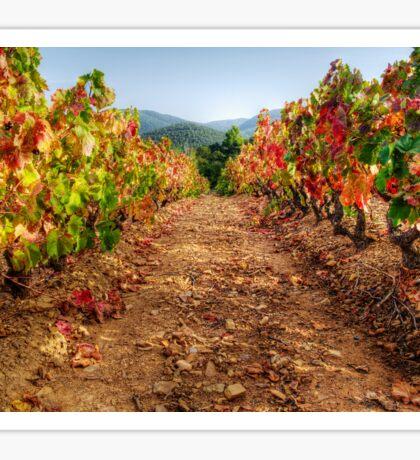 Colorful vineyard Sticker