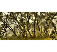 Wind in the snowgums Photographic Print