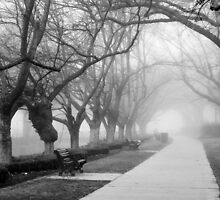 Fog in the Park by Joel Bramley