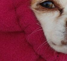 Hoodie Chihuahua Sticker