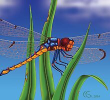 Dragonfly On The Grass by Hamish Graham
