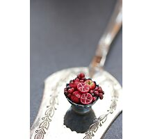 Burgundy Fruit Cup Photographic Print