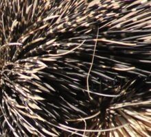 Porcupine and its Quills - African Wildlife Sticker