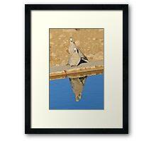Cape Turtle Dove - Reflection of Blue - African Wildlife Framed Print