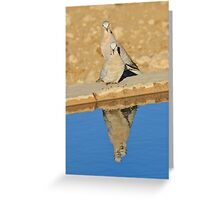 Cape Turtle Dove - Reflection of Blue - African Wildlife Greeting Card