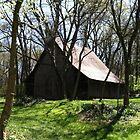 Shady Barn by trisha22