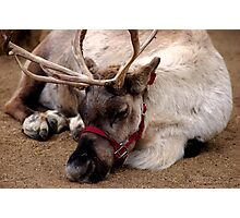 Reindeer waiting for Santa, Happy waiting Photographic Print