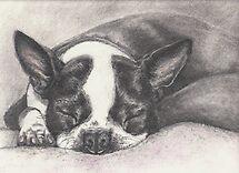 "Sleeping ""Lady"" by Pam Humbargar"