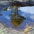 Tree reflected in puddle by Arie Koene