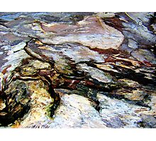 Rock Lizard Photographic Print